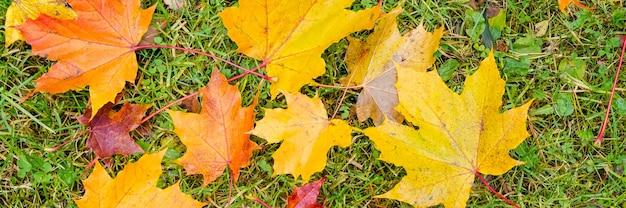 Ahornblätter im herbst im gras