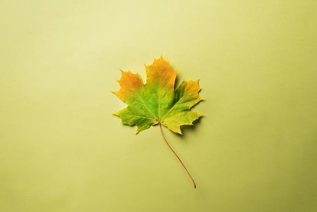 Ahornblatt auf grünem hintergrund mit kopienraum.