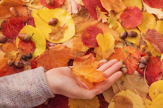 Ahornblatt in der hand im freien Premium Fotos