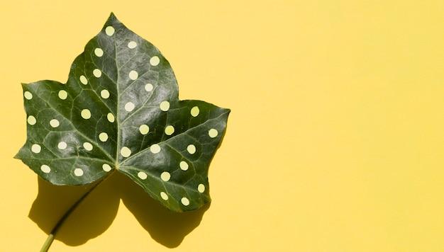 Ahornblatt mit kopienraumhintergrund