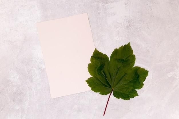 Ahornblatt mit leerem weißbuch