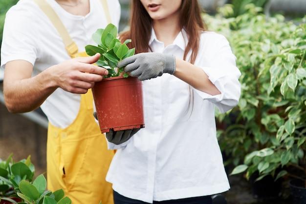 Aktives gespräch. ein paar nette gartenarbeiter in arbeitskleidung, die sich um die pflanze im topf im gewächshaus kümmern.