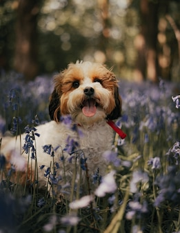 Aktives verspieltes kleines haustier, das tanzend auf dem gras spielt. lächelnder süßer jack russell terrier in der dynamischen pose in der bewegung.