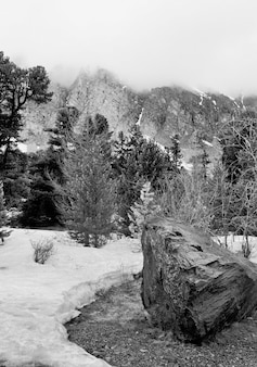 Aktru-tal im altai-gebirge felsen und bäume im frühlingsschnee in einem bergtal