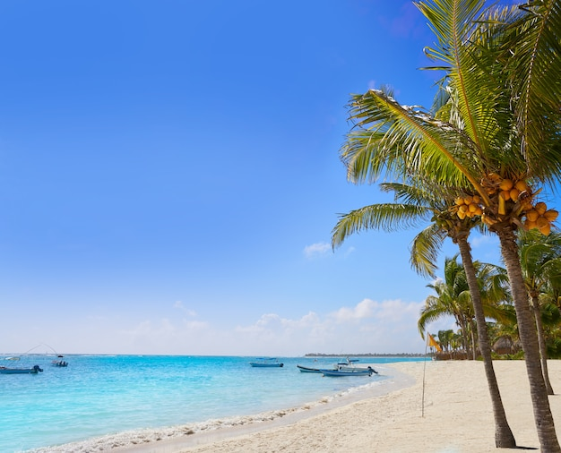 Akumal-kokosnusspalme-strand riviera maya