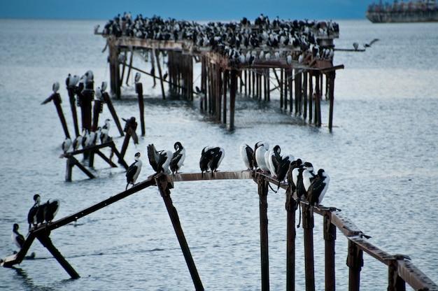 Albatross im hafen von punta arenas, chile patagonia