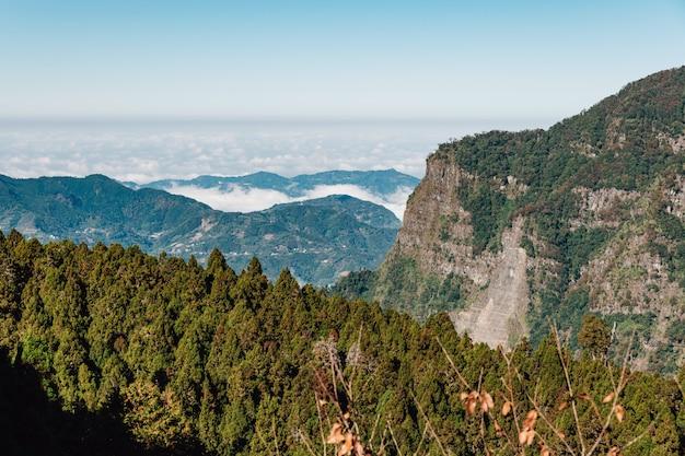 Alishan-berg mit niedriger wolke und nebel auf berg und japanischem cedar forest im vordergrund in alishan, taipeh.