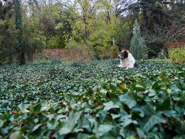 Allein streunender hund im garten in einem feld von pflanzen