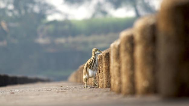 Alleiniger vogel