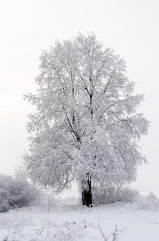 Alles ist mit schnee bedeckt. fabelhafte weihnachten