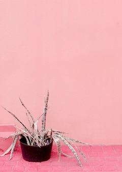 Aloe an der rosa wand. pflanzen auf rosa modeidee