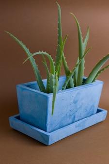 Aloe vera-anlage eingemacht in gemaltem konkretem topf auf braunem hintergrund