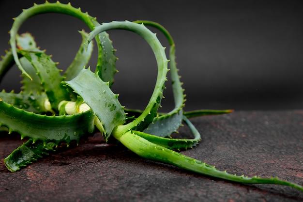 Aloe vera auf braun