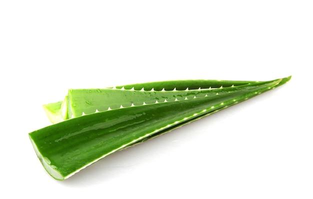 Aloe vera blätter isoliert