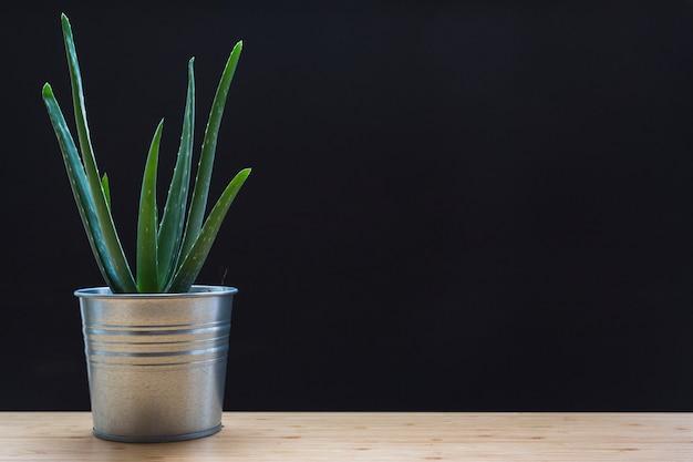Aloe vera im silbernen behälter auf tabelle vor schwarzem hintergrund