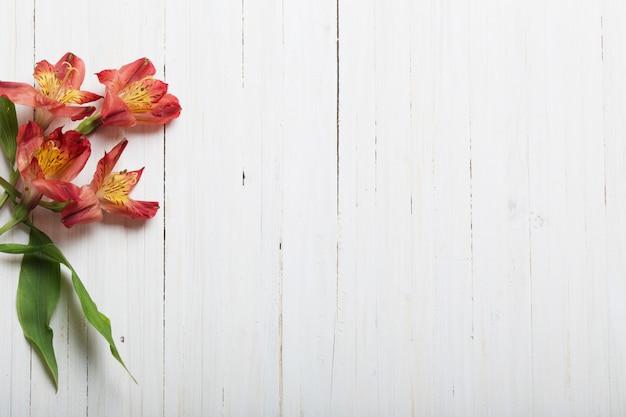 Alstroemeria blüht auf weißem hölzernen hintergrund