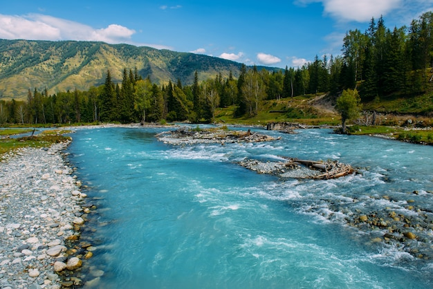 Altai-landschaft mit gebirgsfluss und grünen felsen, sibirien, altai-republik, russland