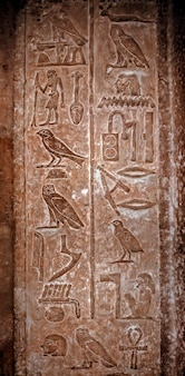 Alte ägyptische hieroglyphen mit dem bild verschiedener vögel
