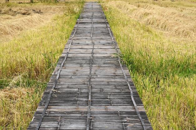 Alte bambuswebbrücke auf einem reisfeld