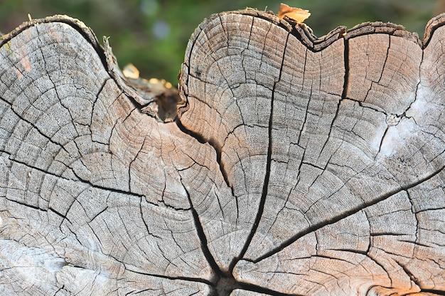 Alte baumstumpfbeschaffenheit backgroud hölzerne naturbeschaffenheitstischplatte für designblackdrop oder -überlagerung