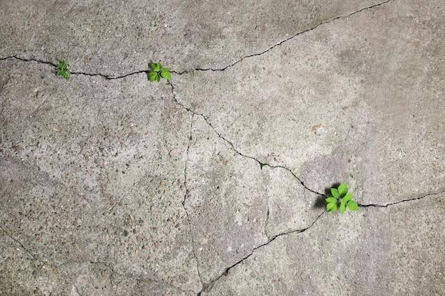 Alte betonoberflächen kollabieren mit der zeit und grüne pflanzen sprießen in den resultierenden rissen