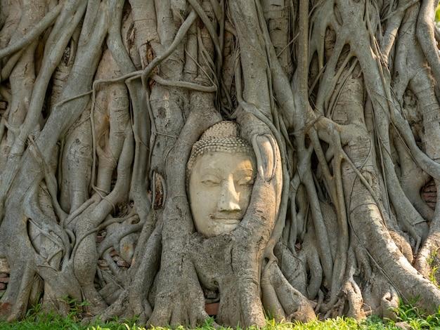 Alte buddha-kopfstatue mit wachsenden baumwurzeln im wat phra mahathat tempel in ayudthaya, thailand, historischer tempel des weltkulturerbes, ungesehene reisen