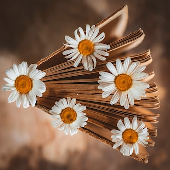 Alte bücher mit blumen der weißen feldgänseblümchen.