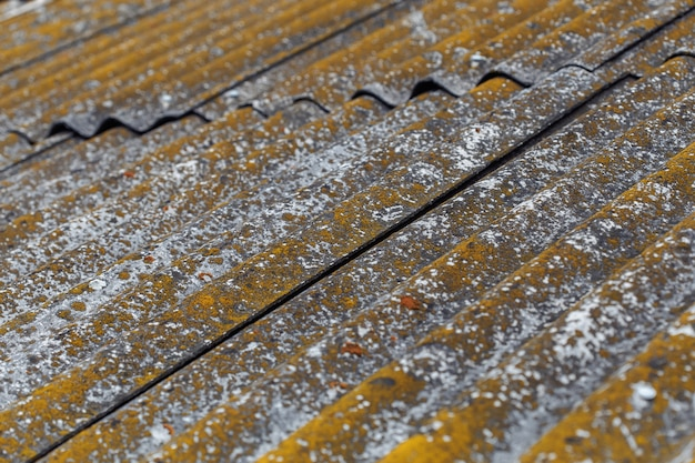 Alte dachplatten mit flechten und moos