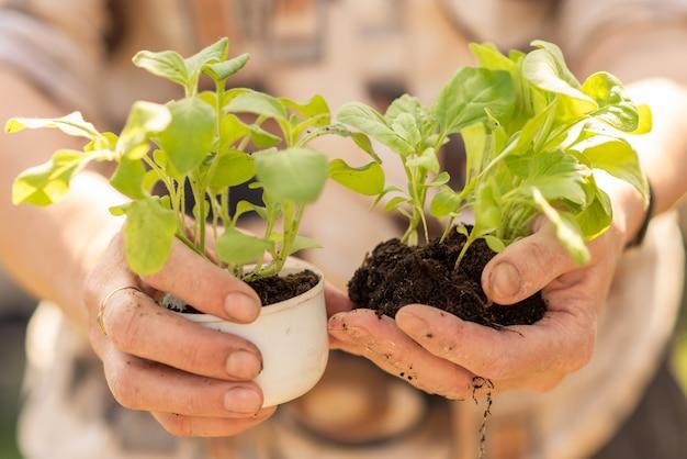 Alte frau, die sämlinge der jungen pflanzen hält