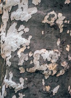 Alte holzbaumbeschaffenheit. hintergrund und muster.