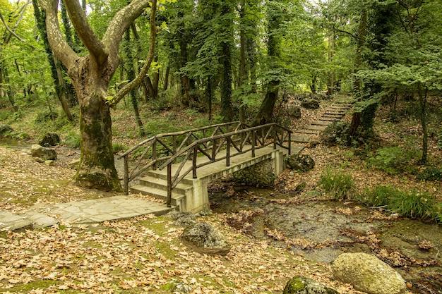 Alte holzbrücke über einen fluss in einem wald mit bäumen