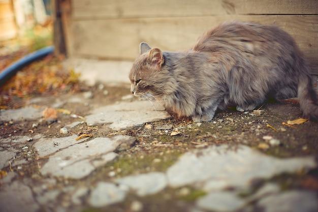 Alte katze, die in der herbstsonne in einem landhaus sich aalt
