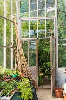 Alte leere terrakotta-töpfe für zimmerpflanzen, die außerhalb des gewächshauses mit verschiedenen tropischen pflanzen wachsen