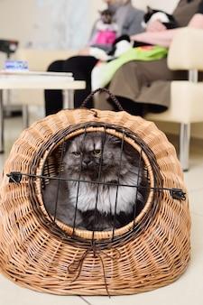 Alte schöne katze, die in einem tierkorb gegen den hintergrund einer tierklinik sitzt.