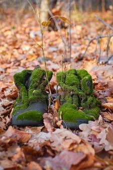 Alte stiefel bedeckt mit moos im herbstwald