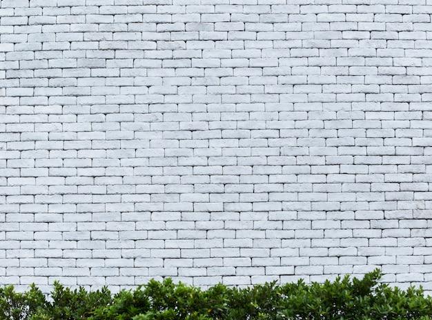 Alte weiße wand im freien mit grünpflanzen für abstrakten hintergrund.