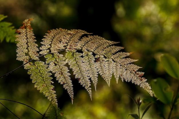 Alter filmischer farnwedel auf unscharfem waldhintergrund im tropischen gebirgscloudwald.