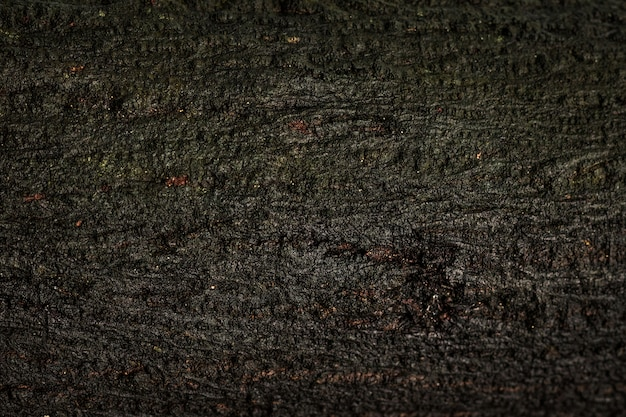 Alter hölzerner beschaffenheits- oder stammhintergrund. holzmaterial von der natürlichen nassen oberfläche.
