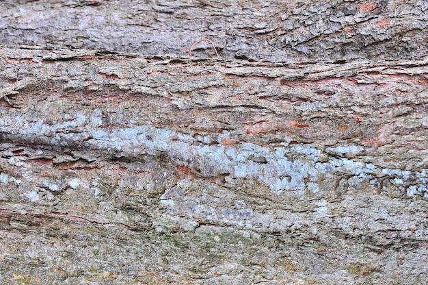 Alter holzbaum textur hintergrund