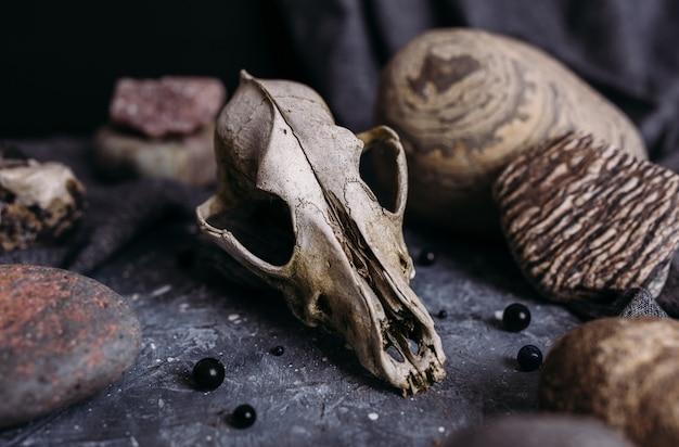Alter hundeschädel und steine auf dem hexentisch dunkle und mysteriöse atmosphäre