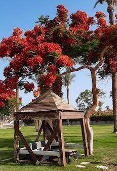 Alter leerer holzpavillon unter einem südlichen baum mit einer leuchtend roten laubkrone