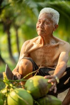 Alter mann, der kokosnuss im kokosnussbauernhof in thailand sammelt.