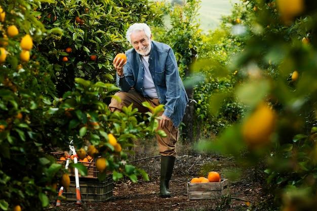 Alter mann, der neben seinen orangenbäumen steht