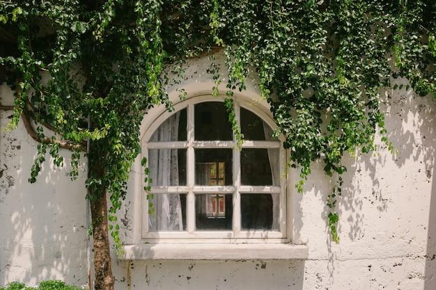 Altes fenster mit grünpflanzeabdeckung und wandhintergrund