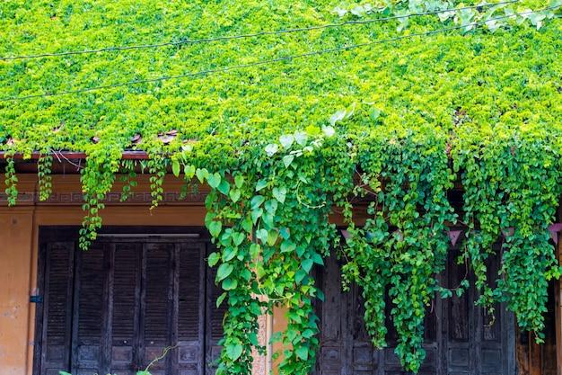 Altes hausdach bedeckt mit reben und bäumen