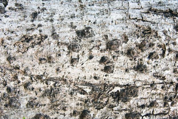 Altes hölzernes baum-beschaffenheits-hintergrund-muster