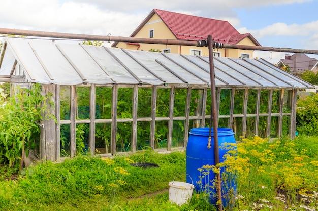 Altes hölzernes gewächshaus. haushalt. gemüse anbauen und ernten.