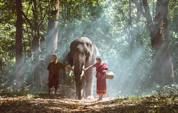 Altes paar, das mit ihrem elefanten in den dschungel in thailand geht