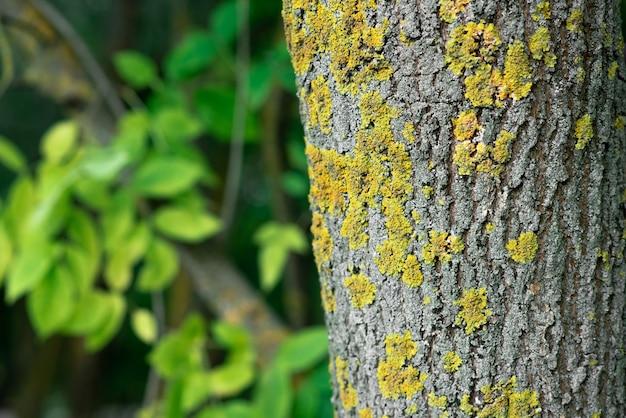 Altes raues holz grau natürlicher hölzerner abstrakter hintergrund wood