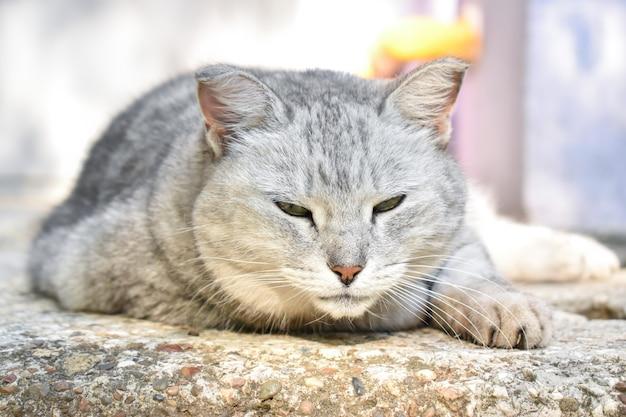 Am eingang liegt eine streunende katze.